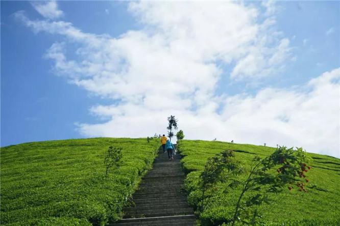 鹤峰木耳山茶园怎么样,木耳山好玩吗,鹤峰木耳山怎么去